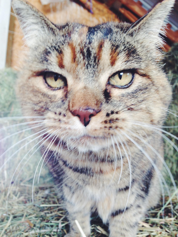 Tally the Cat | The Corduroy Fox