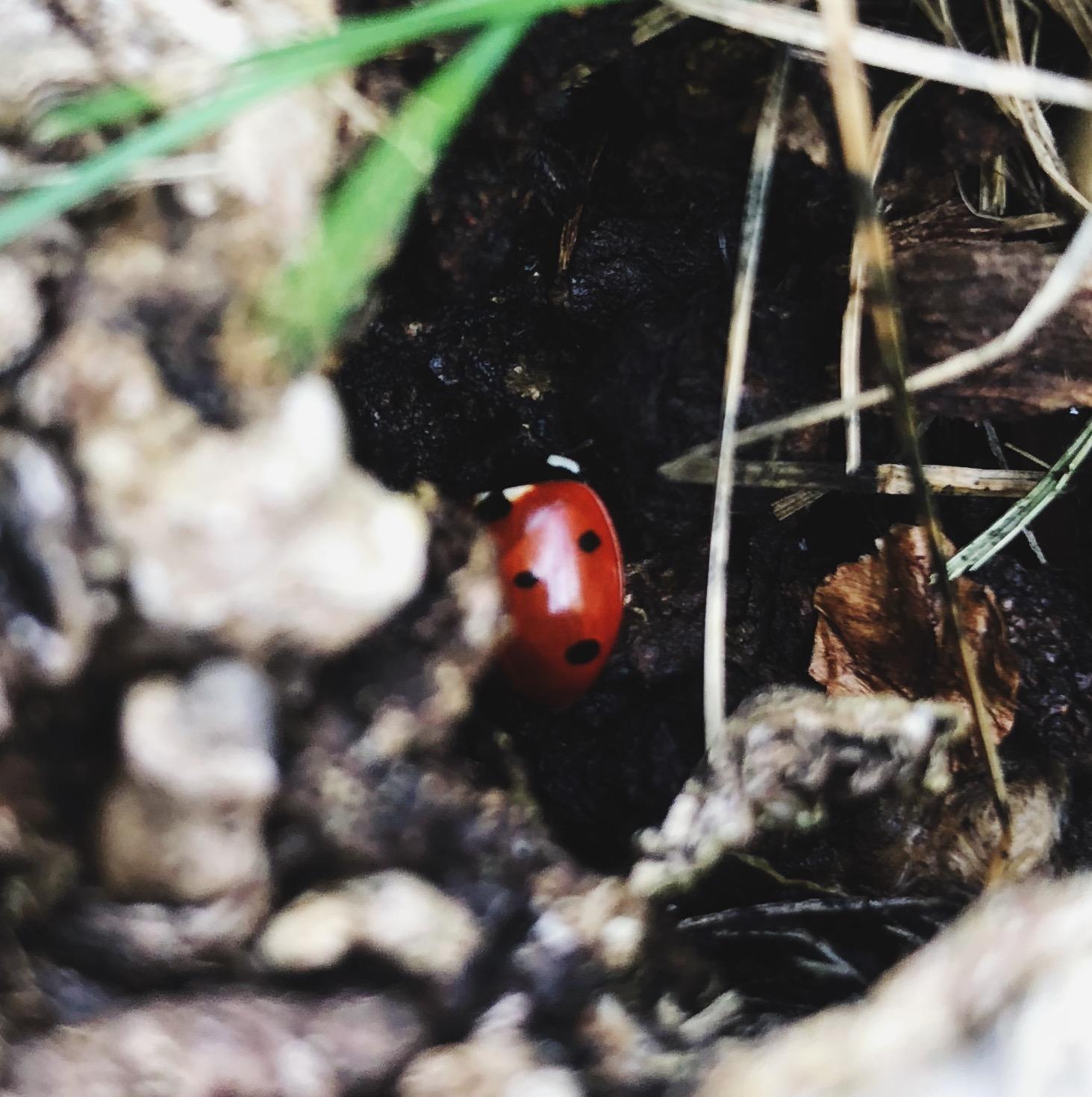 Lovely ladybug