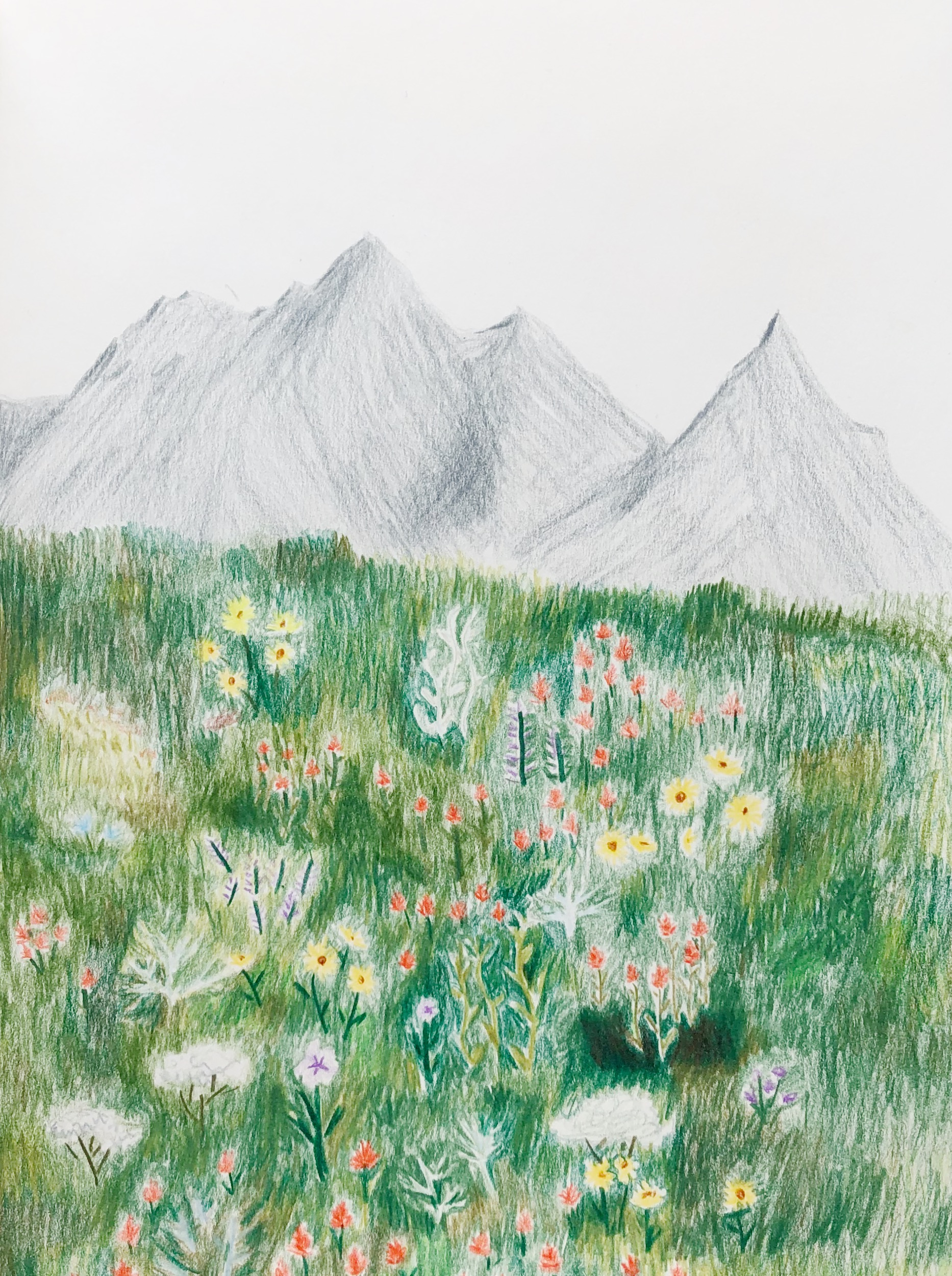 Wildflowers on my mind | Wandering in Whimsy