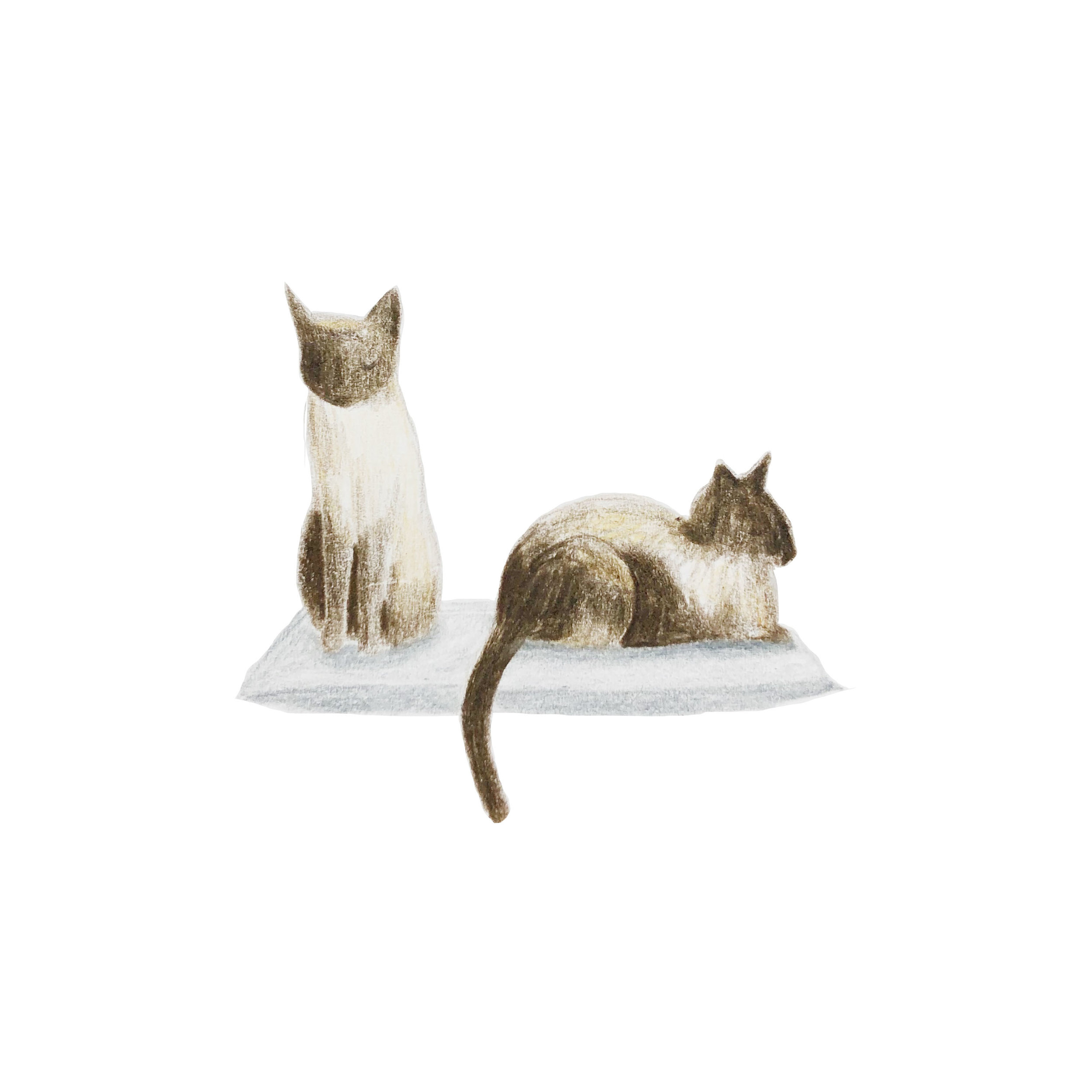 Siamese cats by Wandering In Whimsy