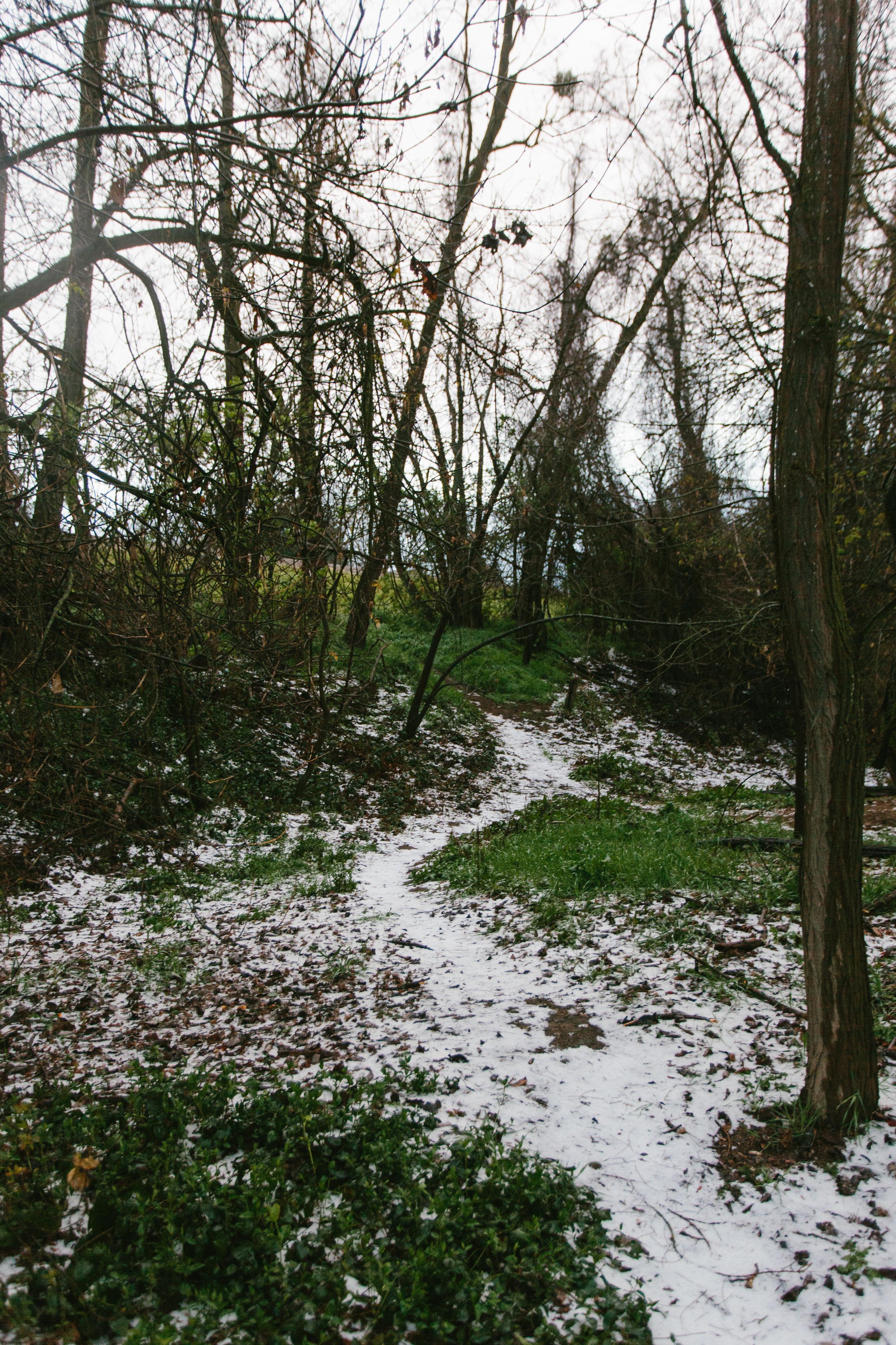 Snow-1-5.jpg