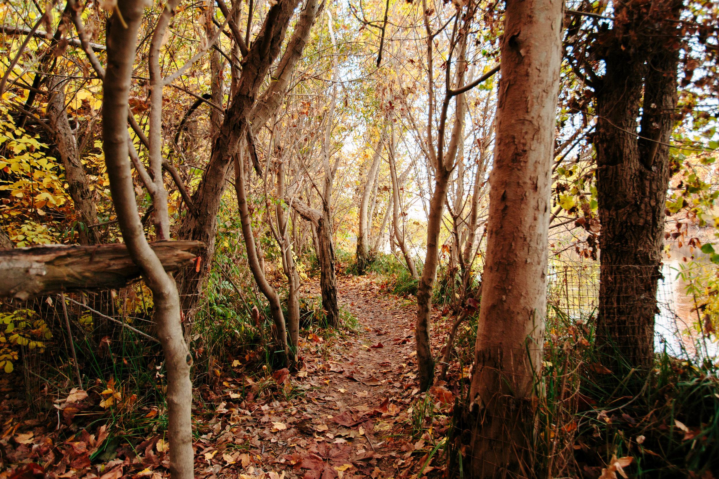 Fall 15.jpg