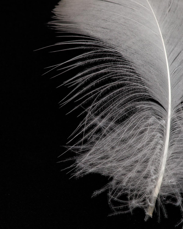Feather-9616 8x10.jpg