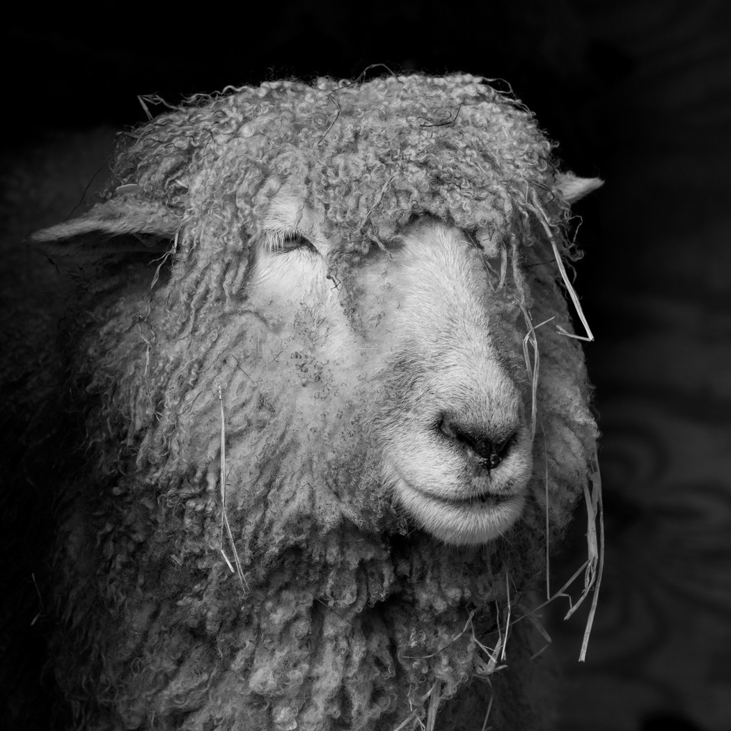 Third Place: Fuzzy Face - Mary Carey