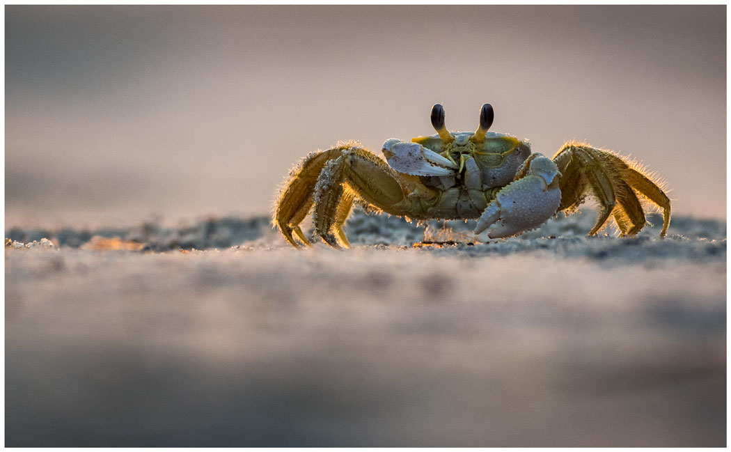 First Place: Ghost Crab Snacking - Anthony Cedrone