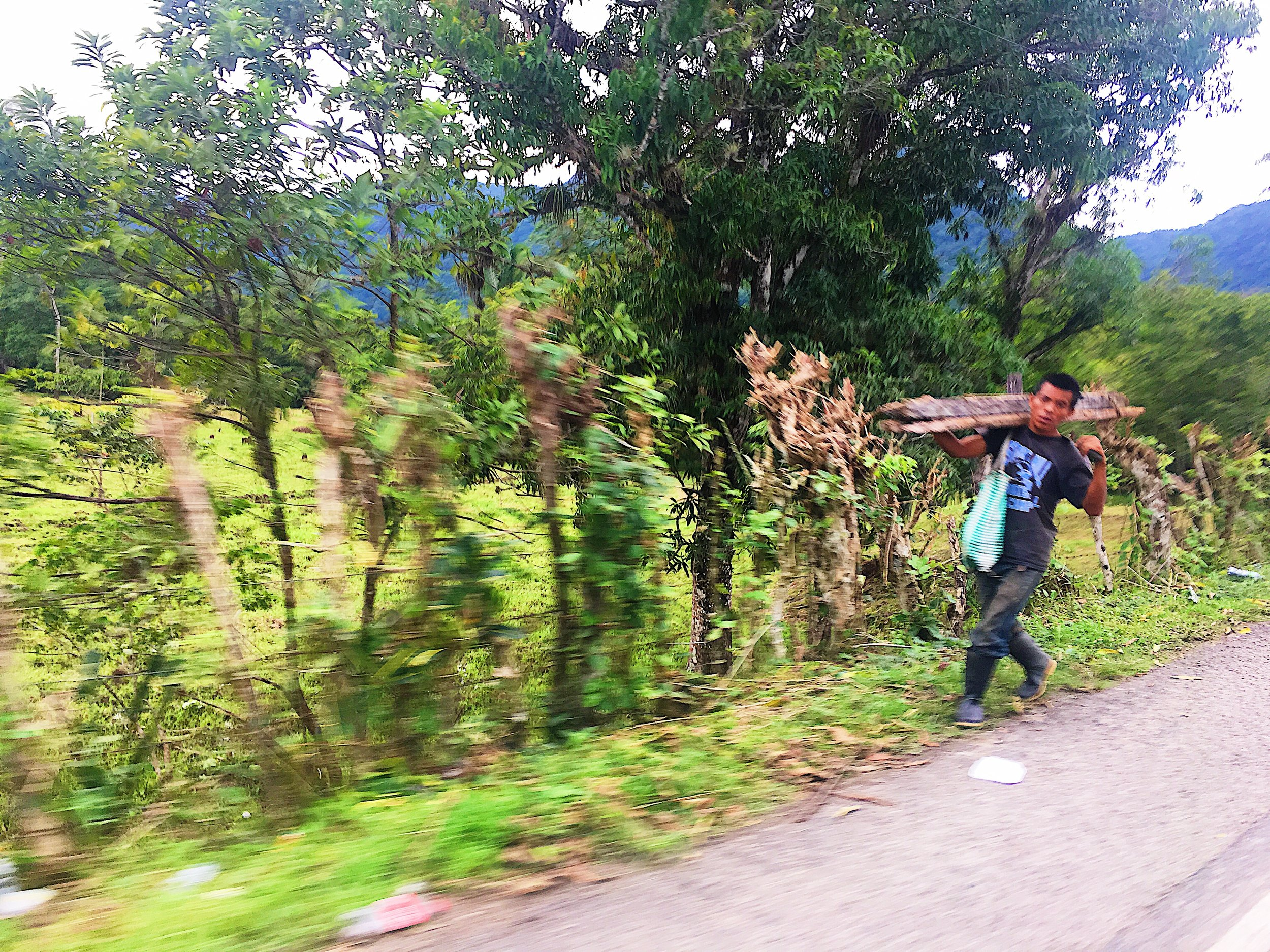 A man walking along the roadside carrying wood in Peten.