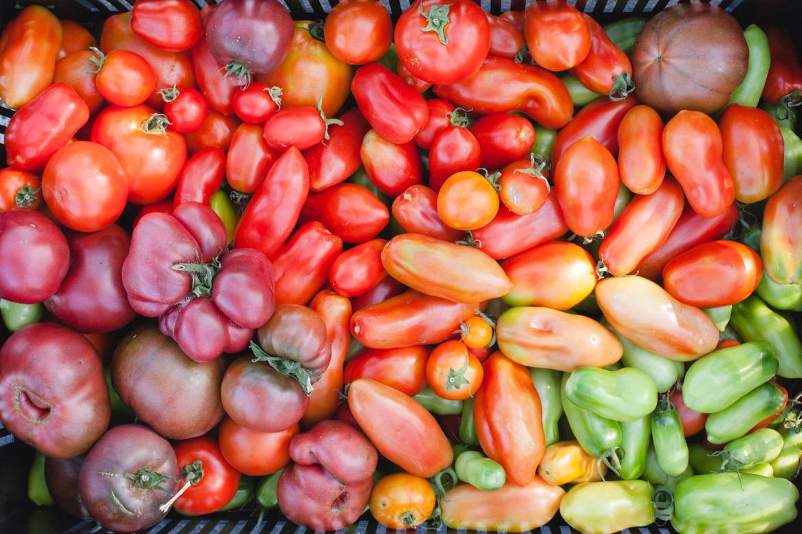 Tomato Varieties_Harvested_021_sRGB.jpg