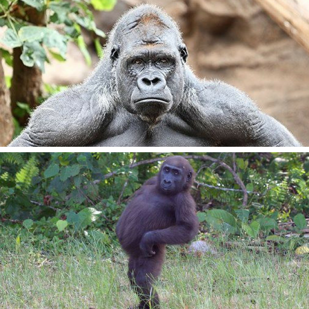 Pictured: What we think we look like when we posture and confidently proclaim our uninformed opinions (above) versus what we actually look like (below).