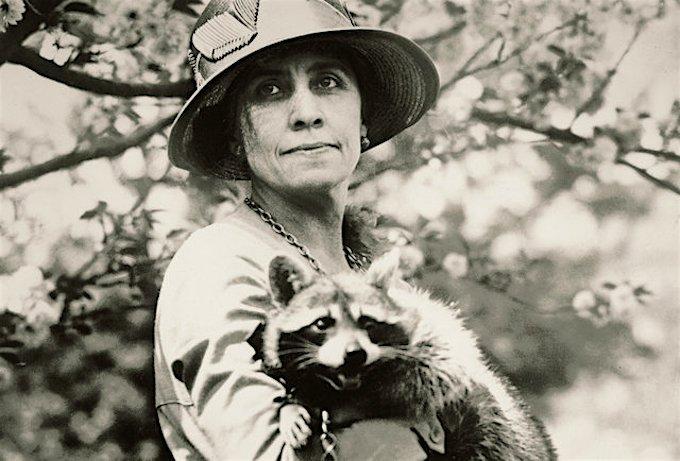 raccoon-rebecca-coolidge.jpg