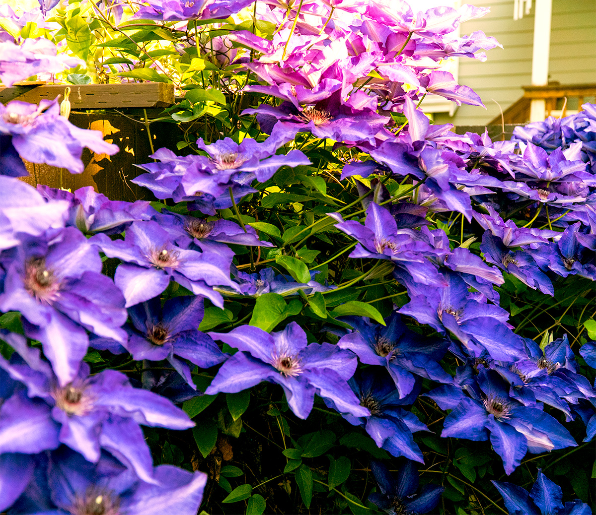 Don't you love purple?