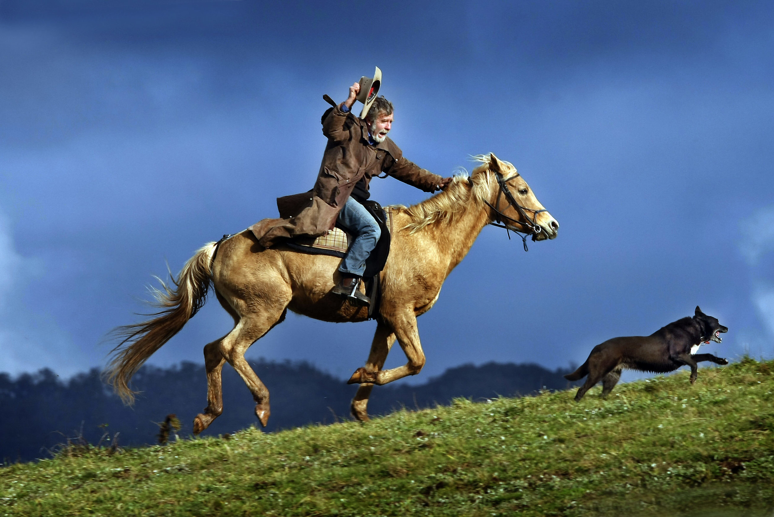 CHP_Export_9297251_HS25  Merrijig resident Chris Dunlop musters his horses in the high country n.jpg