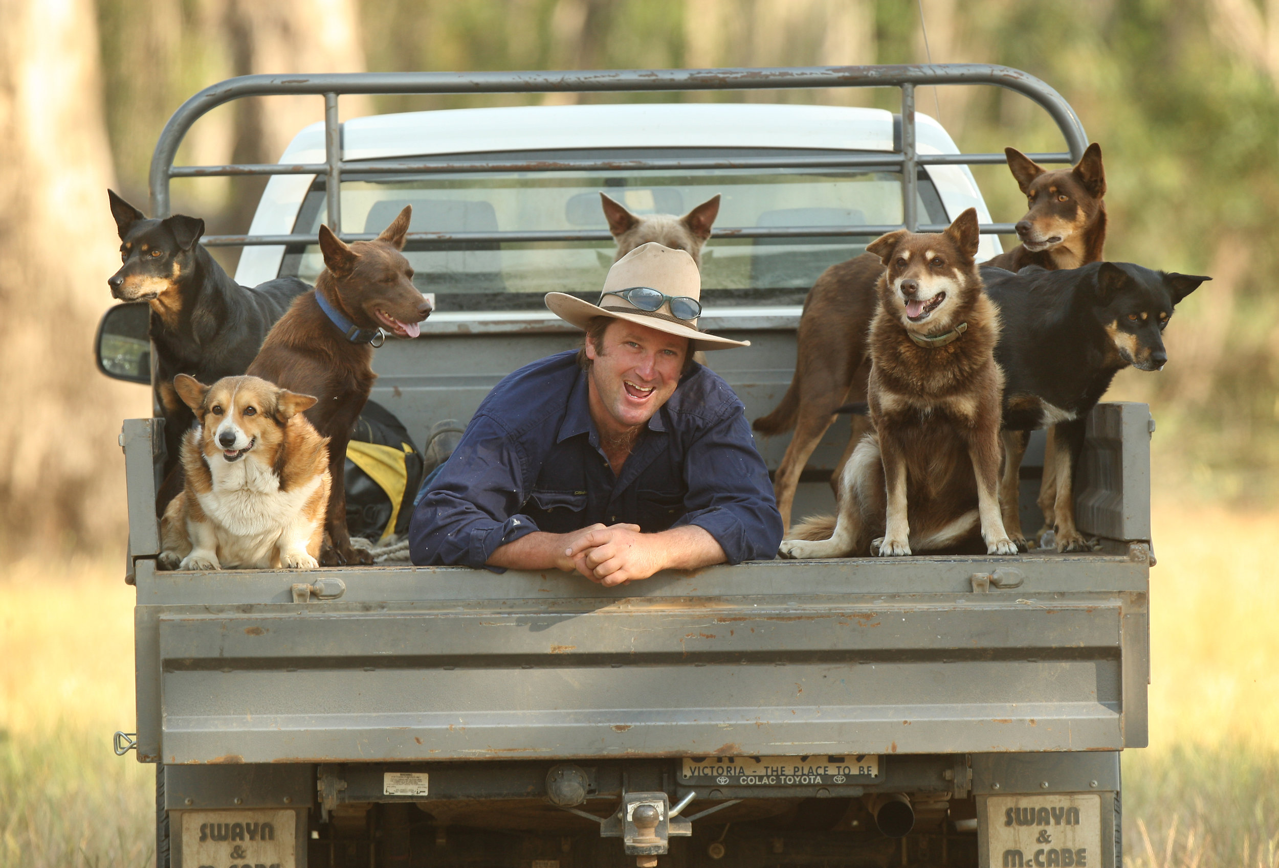 CHP_Export_65208195_Duncan Barber with his working dogs on his ute..jpg