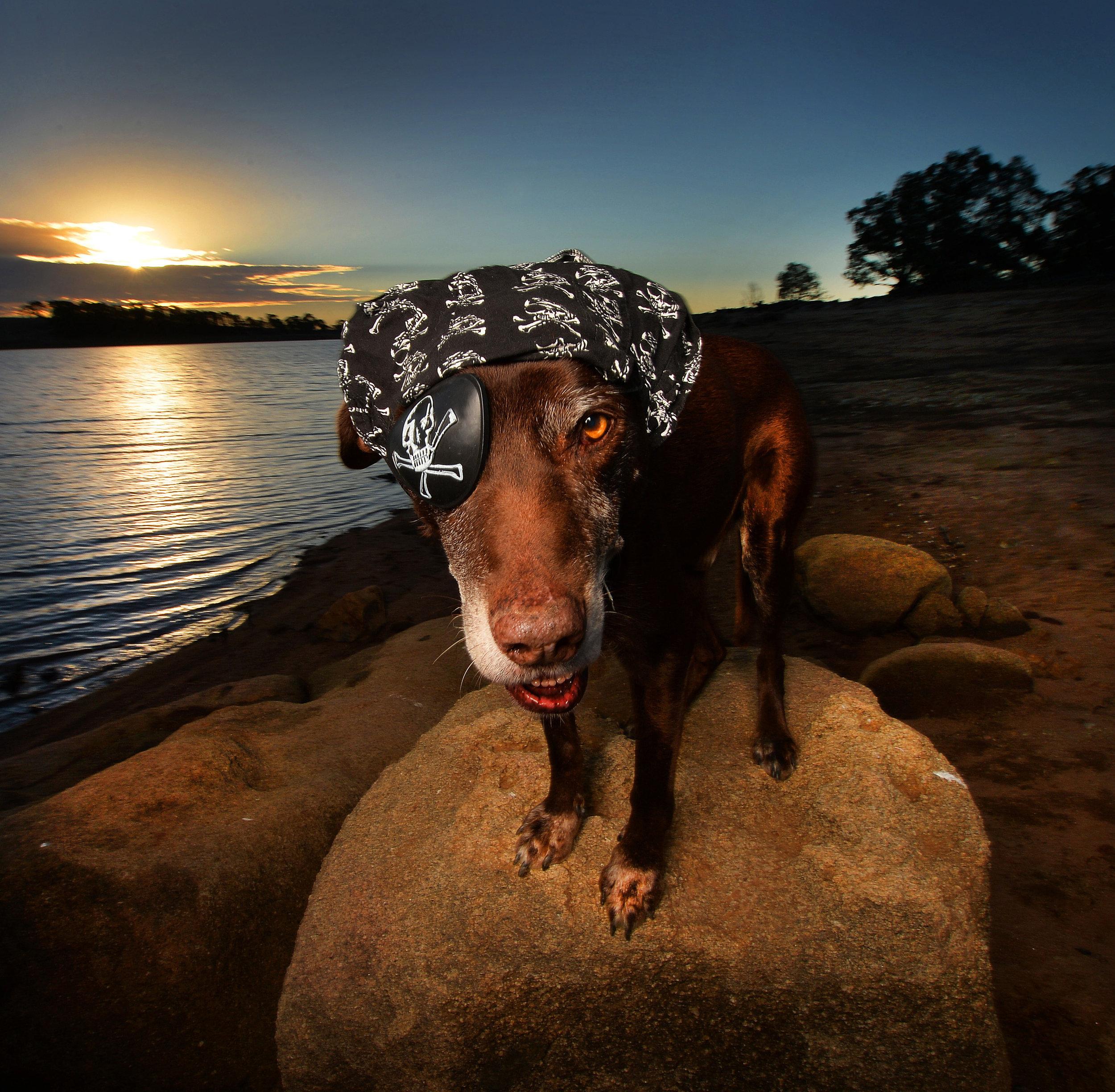 CHP_Export_114586275_Oscar the one eyed dogsurveys his domain at Cairn Curran ReservoirContact B.jpg