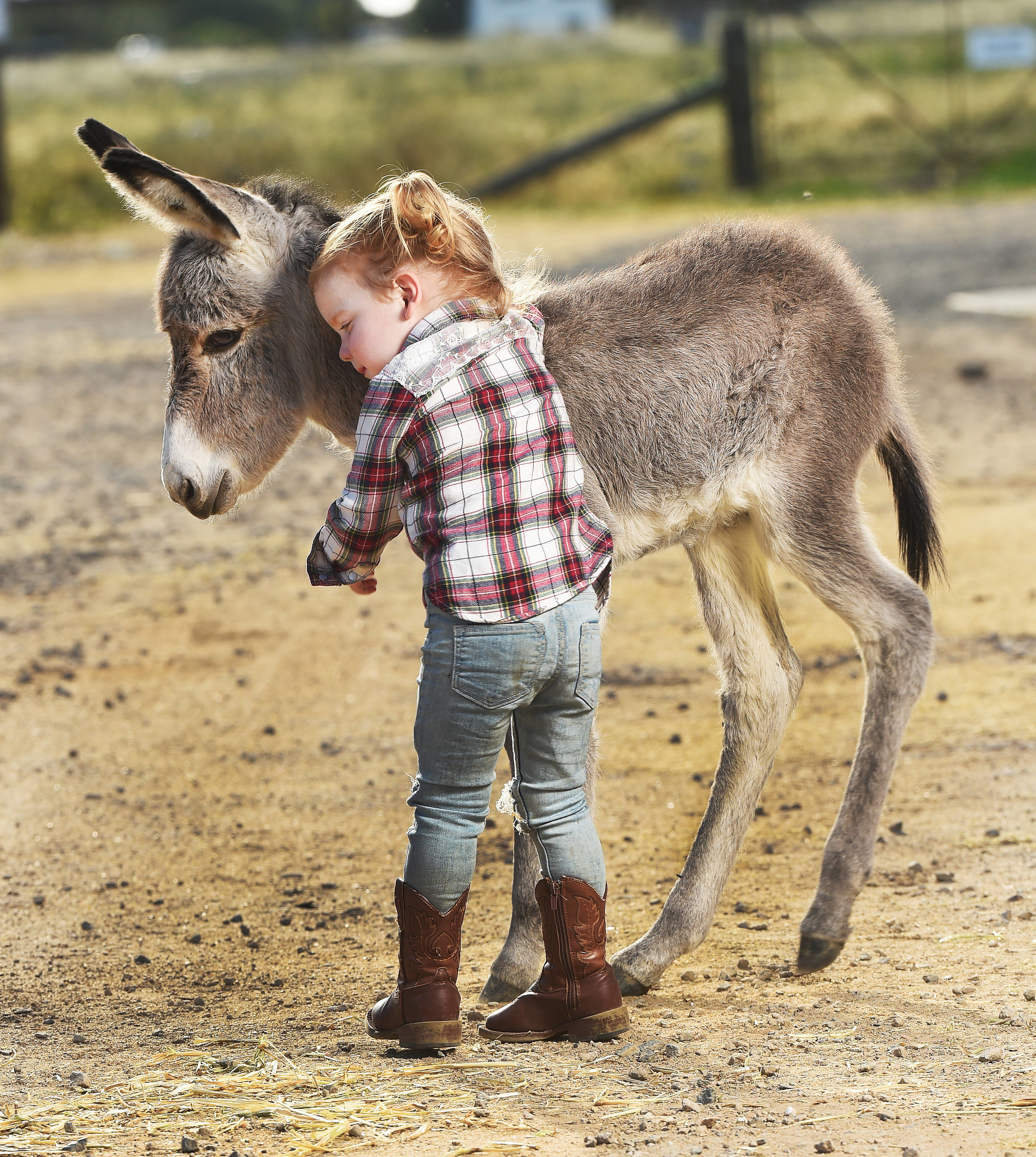 CHP_Export_147438236_Isabella Sherriff 2  holds a 4 day old Baby donkey Claire who  was born to.jpg