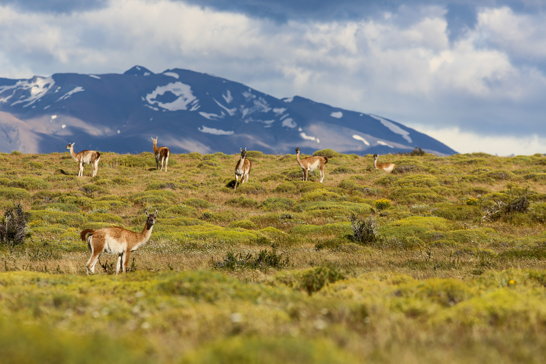 patagonia_19.jpg