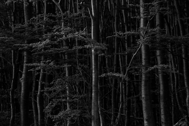 patagonia_bw_3.jpg