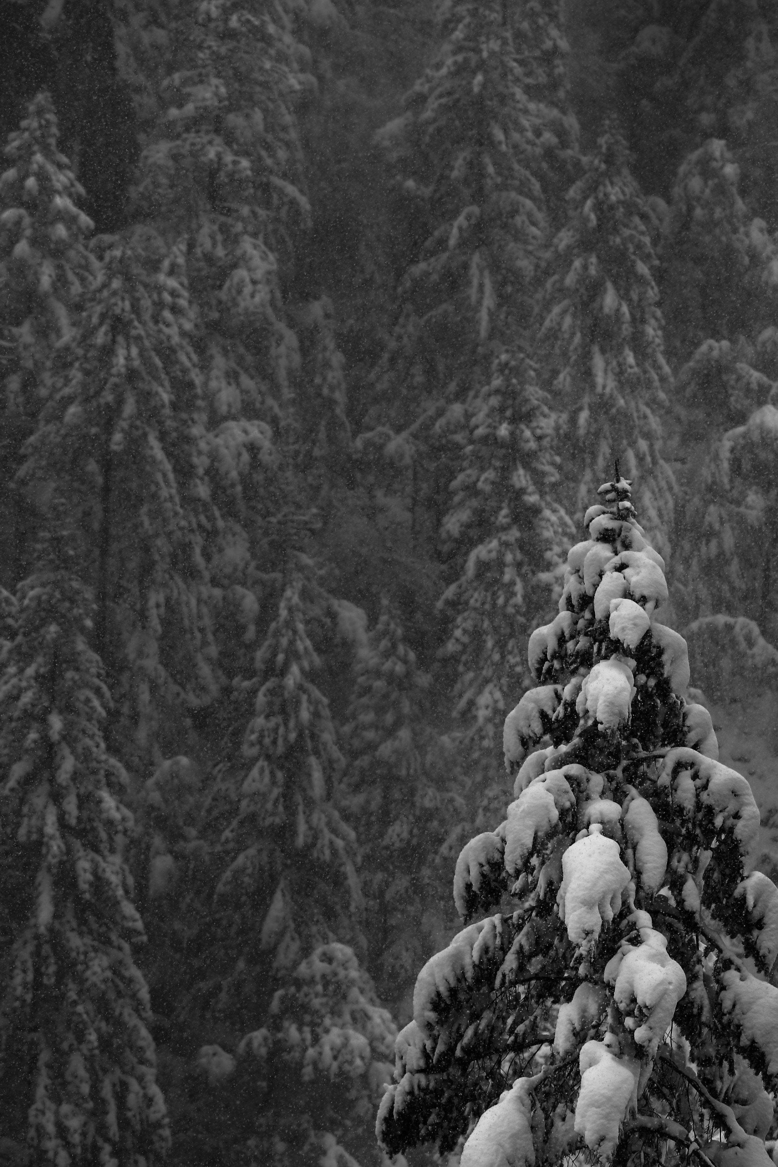 Yosemite_2019_1.jpg