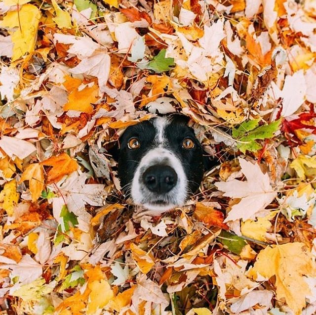 Ha! I love this guy! It's like me holding on to the last bit of fall before the holidays! 🤣 I hope your Thanksgiving has been terrific and that your weekend is wonderful. Stop by my boutique for some great gifts for your upcoming parties. 🧼  pic via @eu.amo.pets