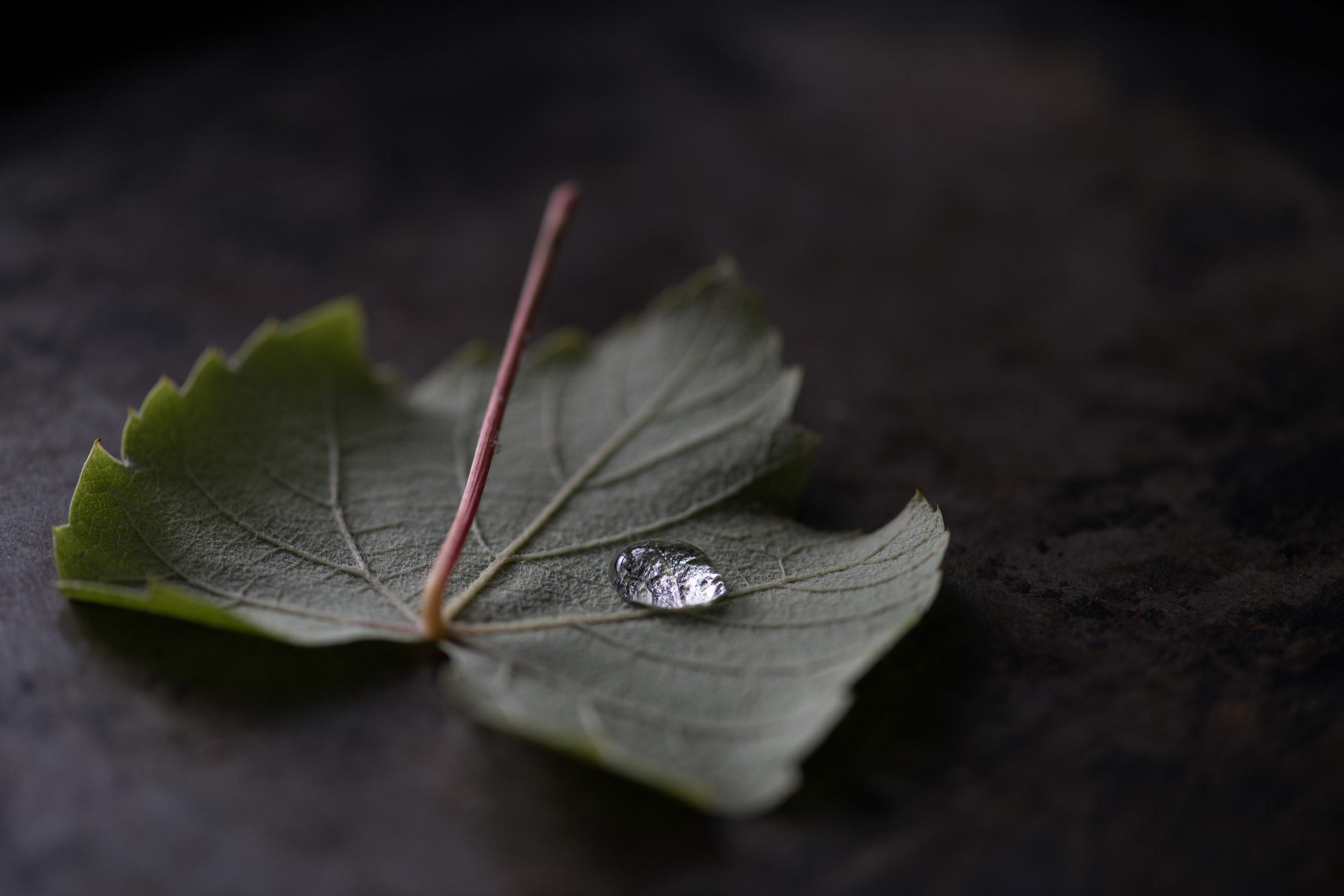 Grape leaf with drop