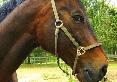 Horse pun side-eye.