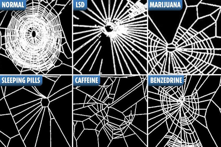 The spiders too ALL the drugs.