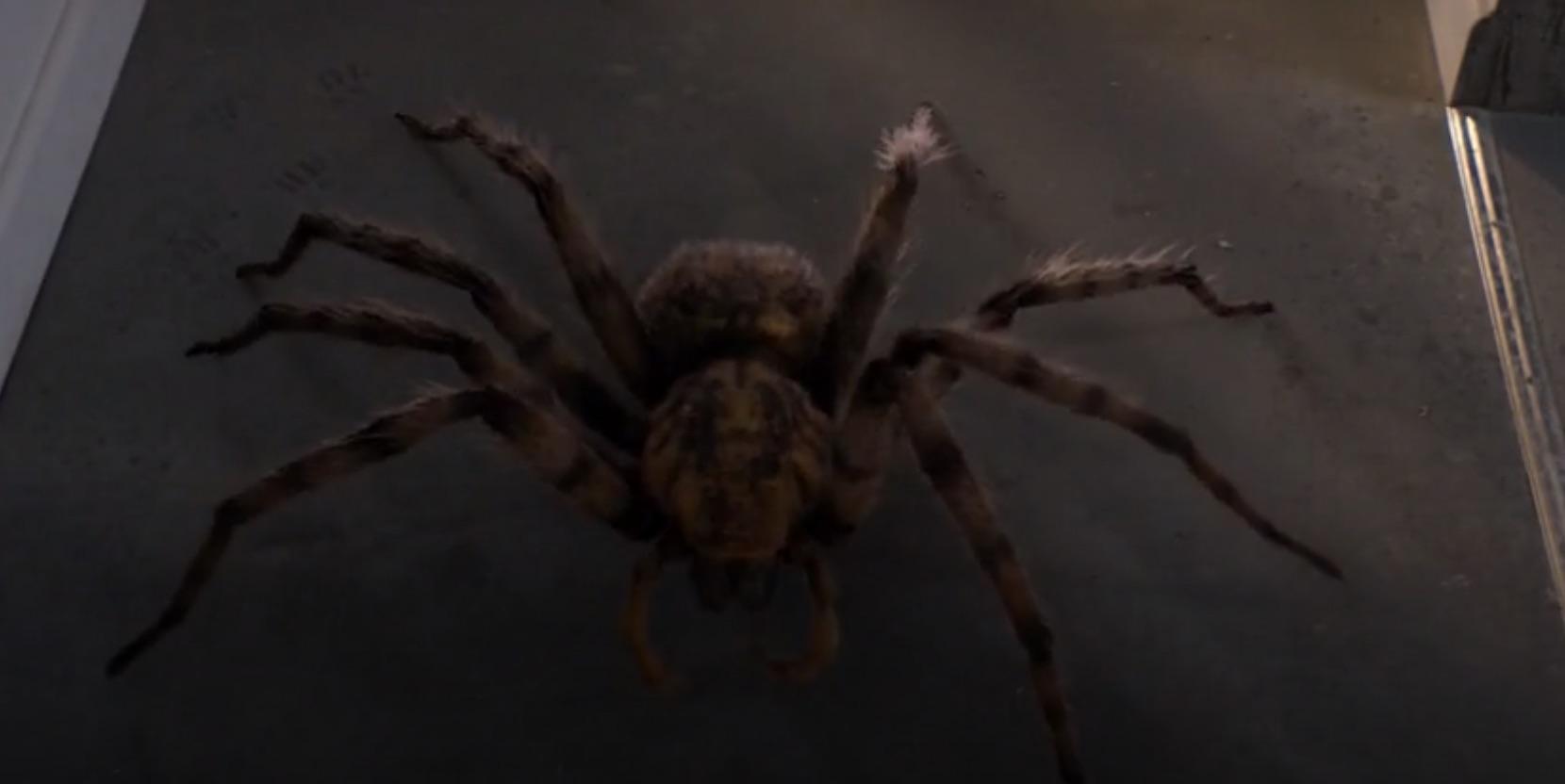 It's a spider, man.