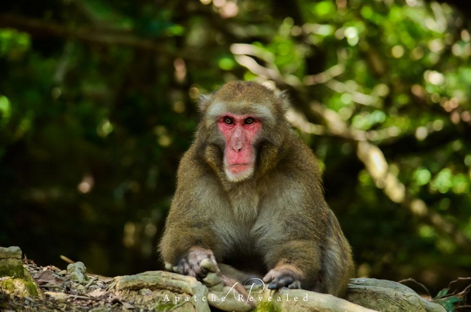 Arashiyama-monkey.jpg