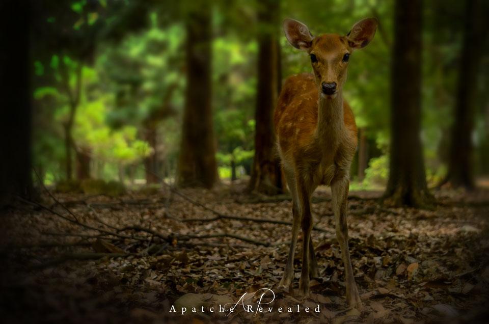 Nara-Deer-woods.jpg