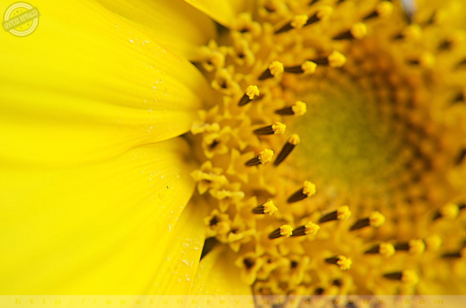 Grebar Flower