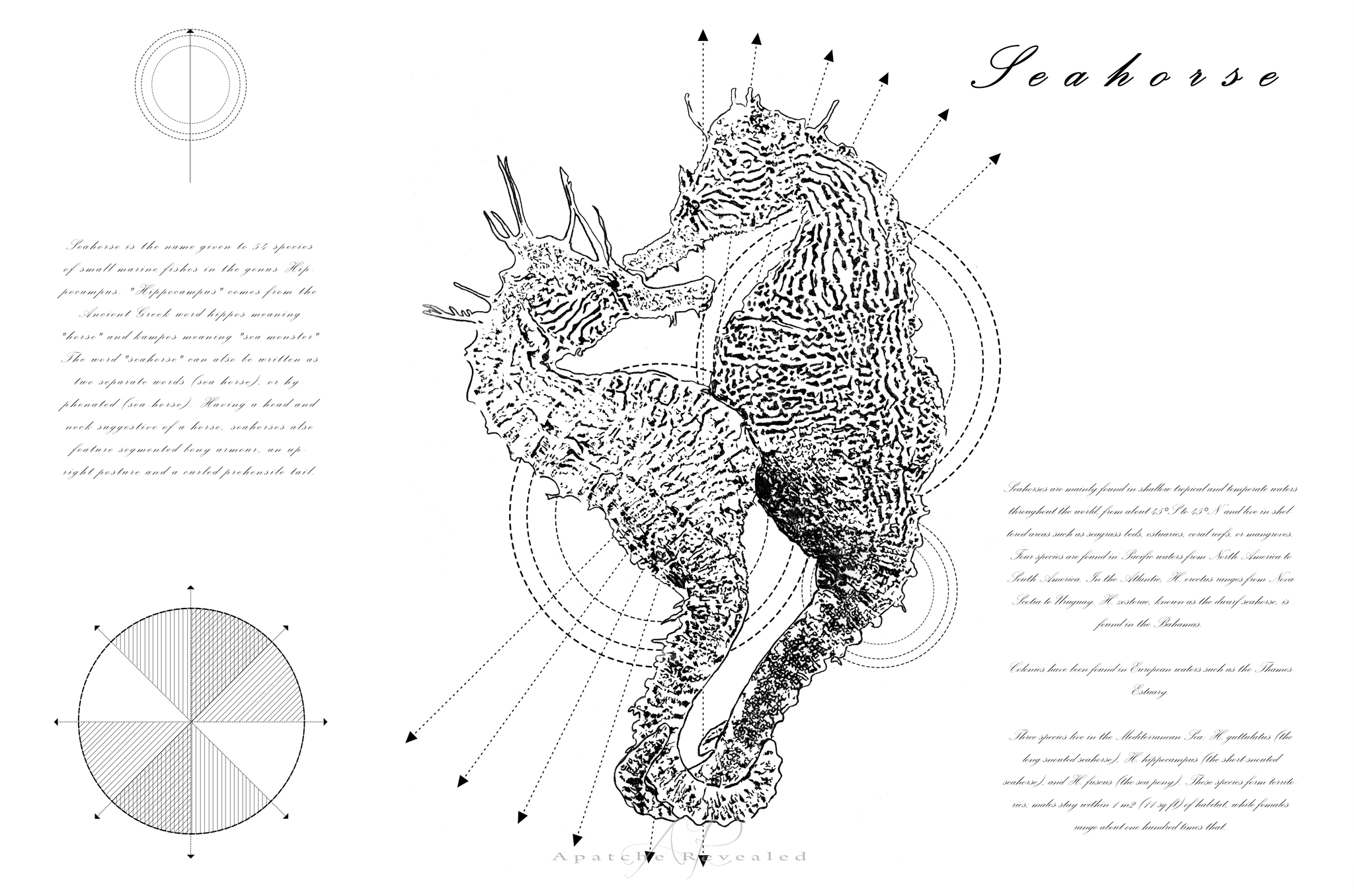 Geometry of a Seahorse