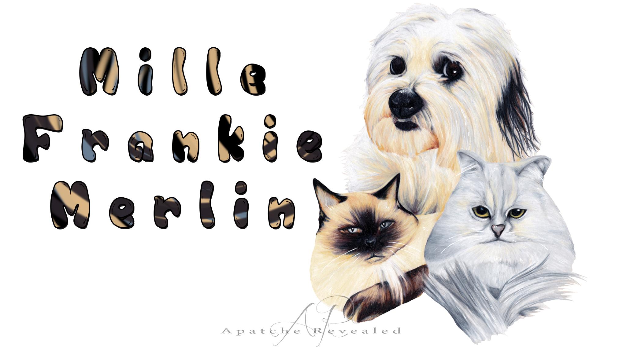 Milla, Frankie & Merlin
