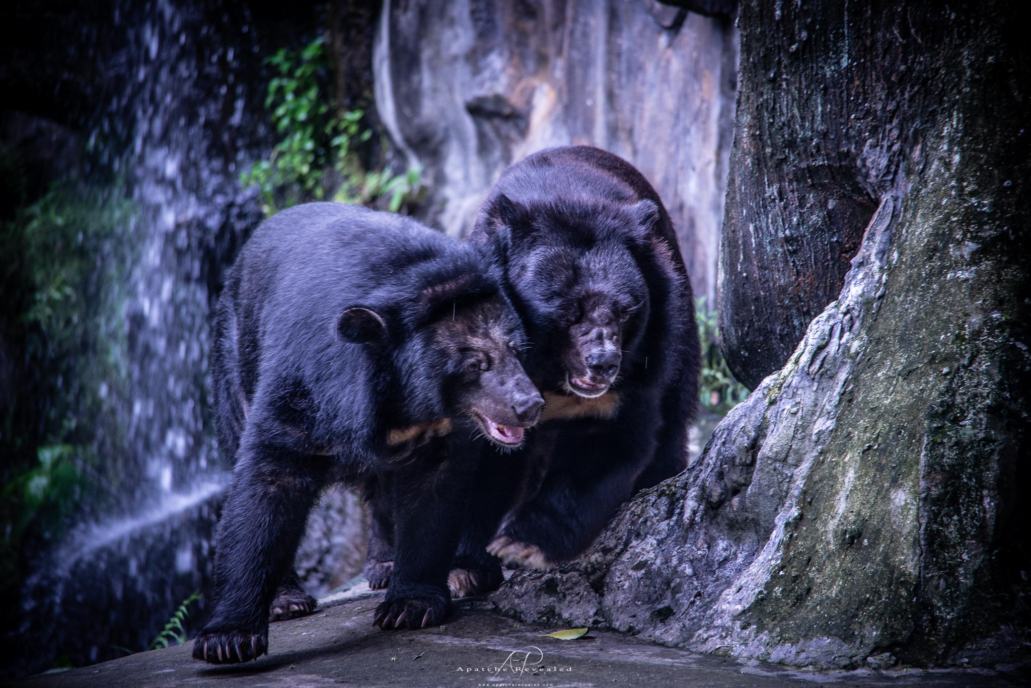 Ho Chi Minh Zoo-18.jpg