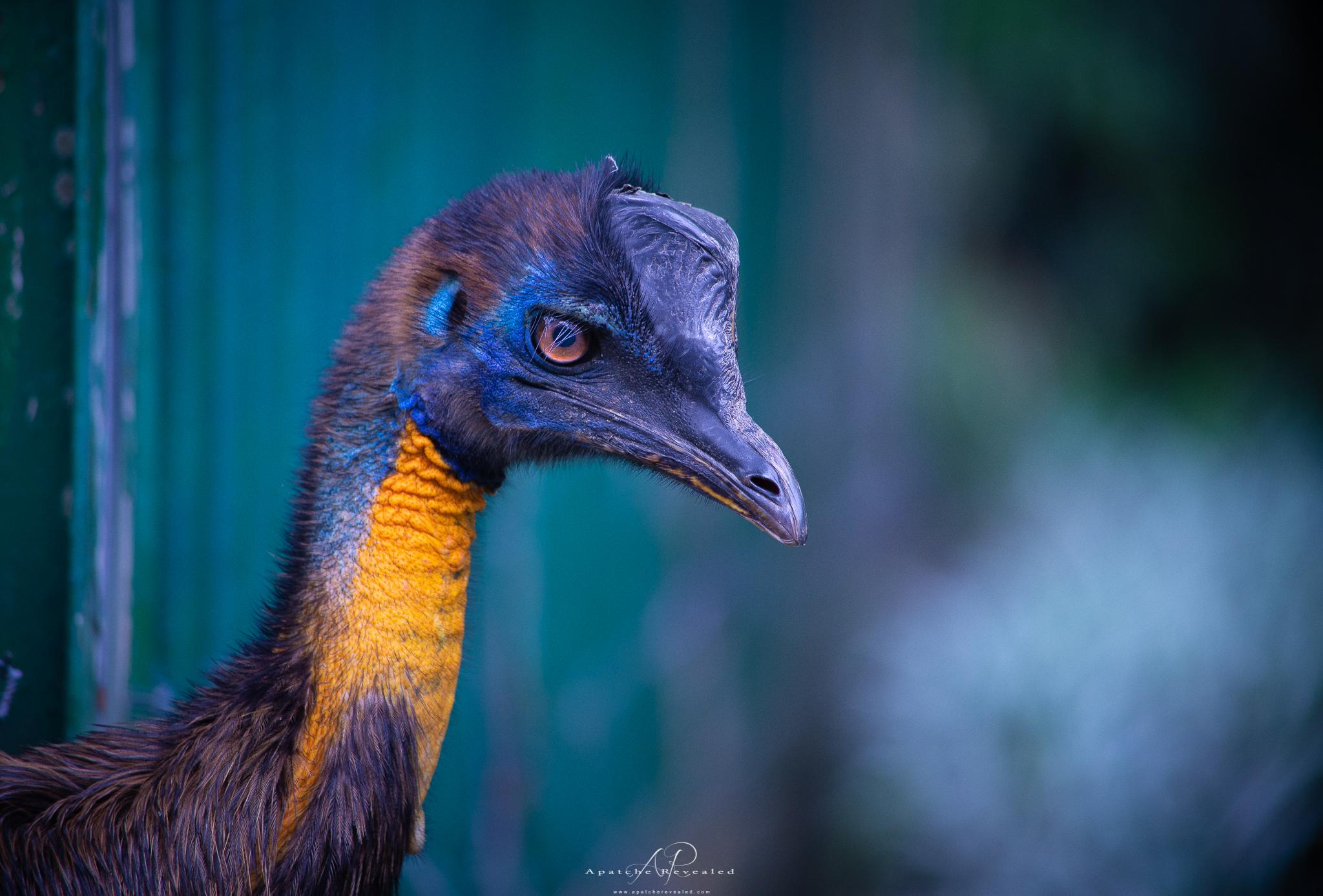 Ho Chi Minh Zoo-19.jpg
