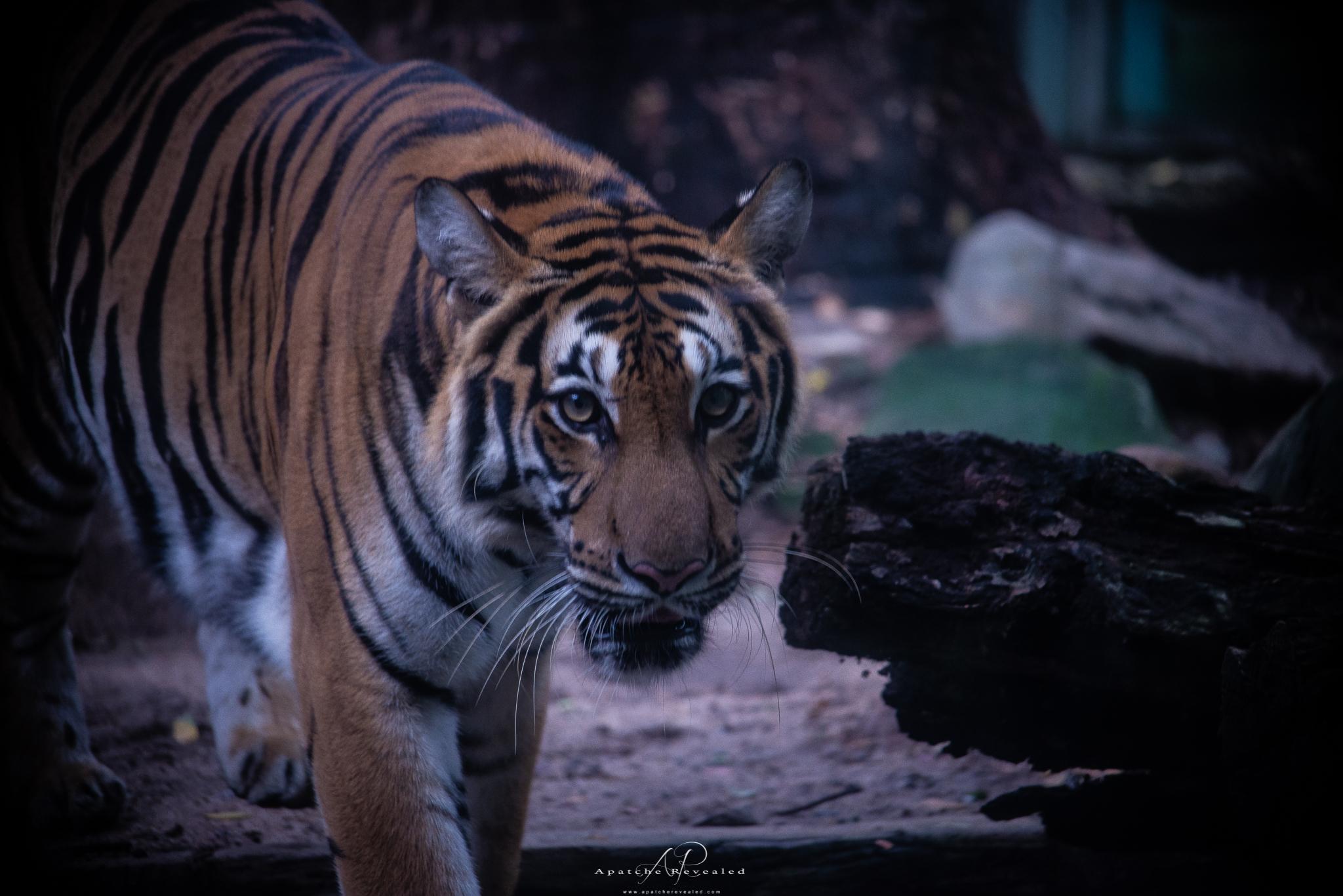 Ho Chi Minh Zoo-22.jpg
