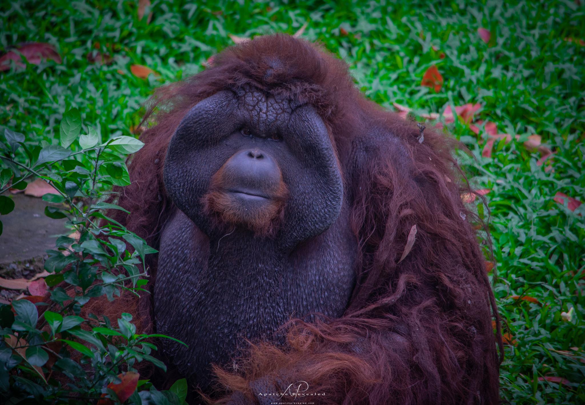 Ho Chi Minh Zoo-21.jpg