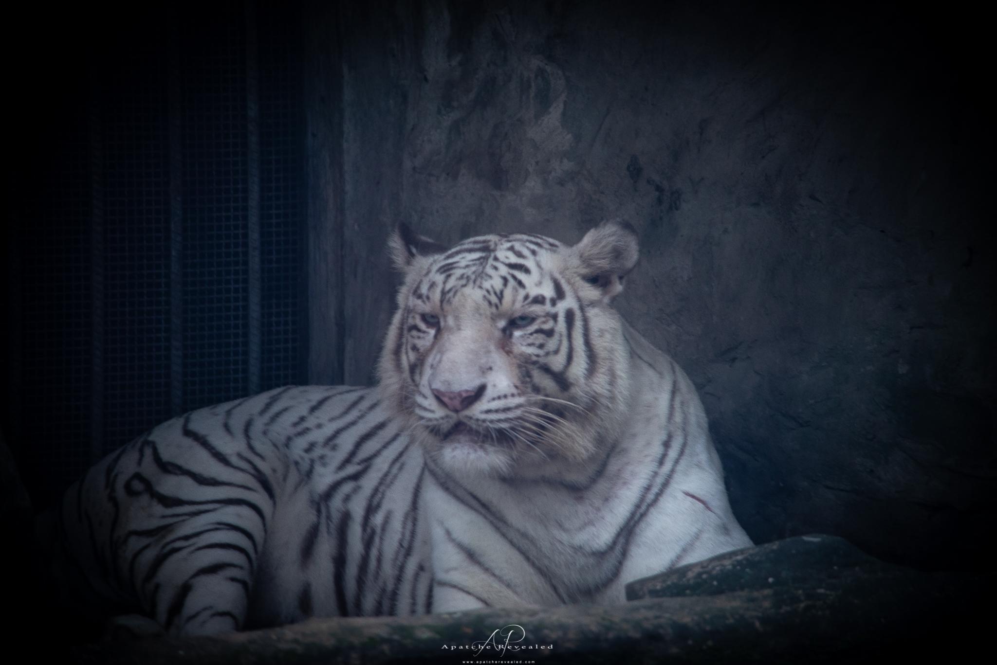 Ho Chi Minh Zoo-23.jpg