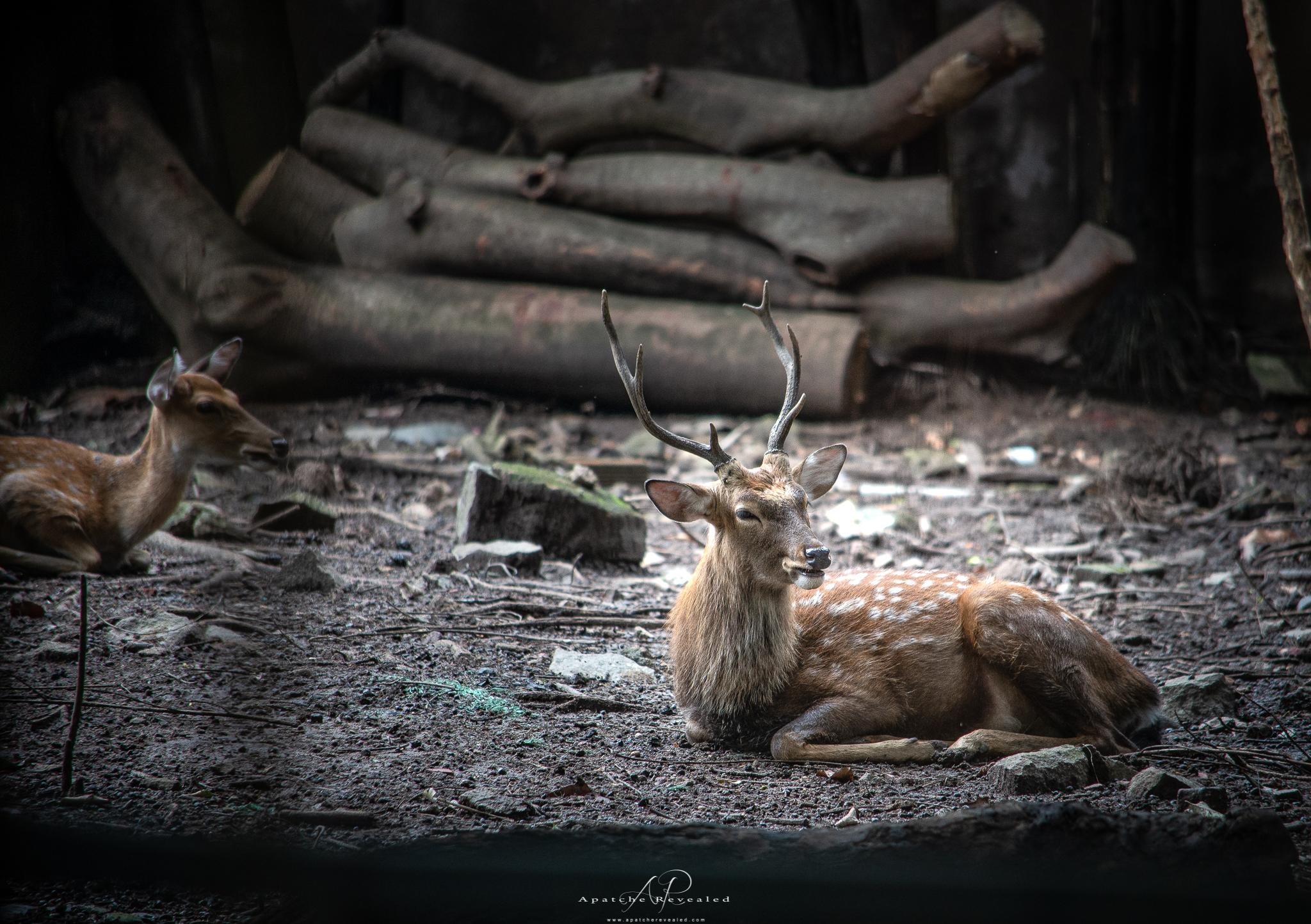 Ho Chi Minh Zoo-24.jpg