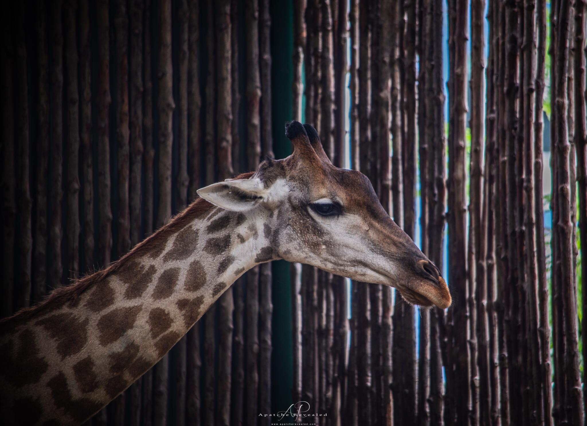 Ho Chi Minh Zoo-26.jpg