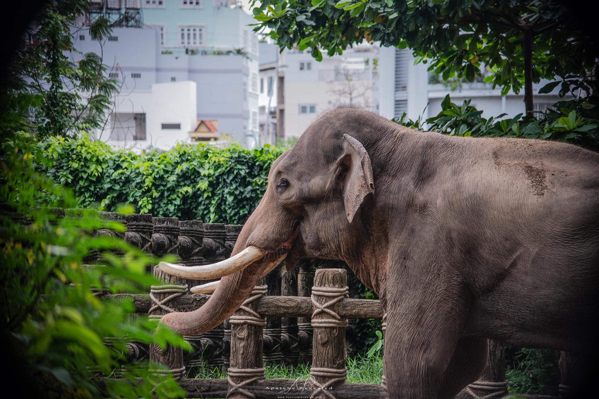 Ho Chi Minh Zoo-27.jpg