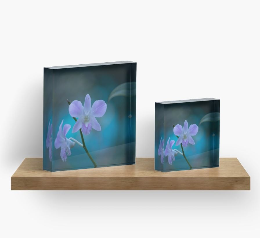 Orchids ice blocks.JPG