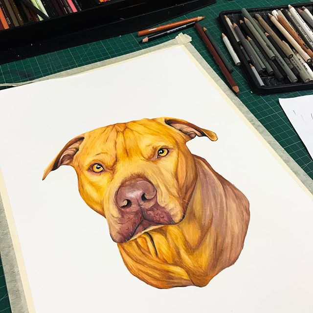 Meet Romeo, this is a first of mine its going to be turned into a tattoo, super excited to see the outcome.. Prismacolors on Fabriano (29.7x42 cm)300 GSM ____________________________________________ #apatche #apatcherevealed #darylfrakes  Come checkout my other Instagram accounts; 📷@apatche_photography 🎨@apatche 💻 @apatche_graphics 🐶 @ar_pet_portraits