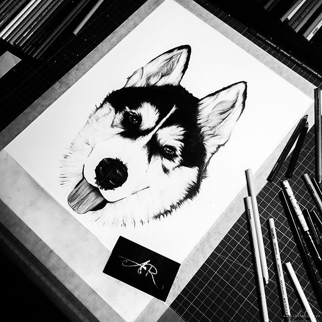 Flashblash time, its cool to see your old work in a new way or black and white in this case.. .  Swipe left ⏩ to see progress .  Prismacolors on Fabriano (29.7x42 cm)300 GSM .  Come check my website to see how your pet can have their very own portrait done too, link in bio.. _____________________________________________ #apatche #apatcherevealed #darylfrakes  Come checkout my other Instagram accounts; 📷@apatche_photography 🎨@apatche 💻 @apatche_graphics 🐶 @ar_pet_portraits