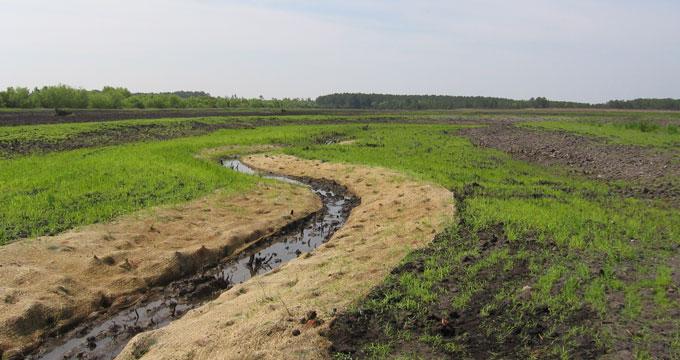North River Wetland Preserve, Carteret County NC