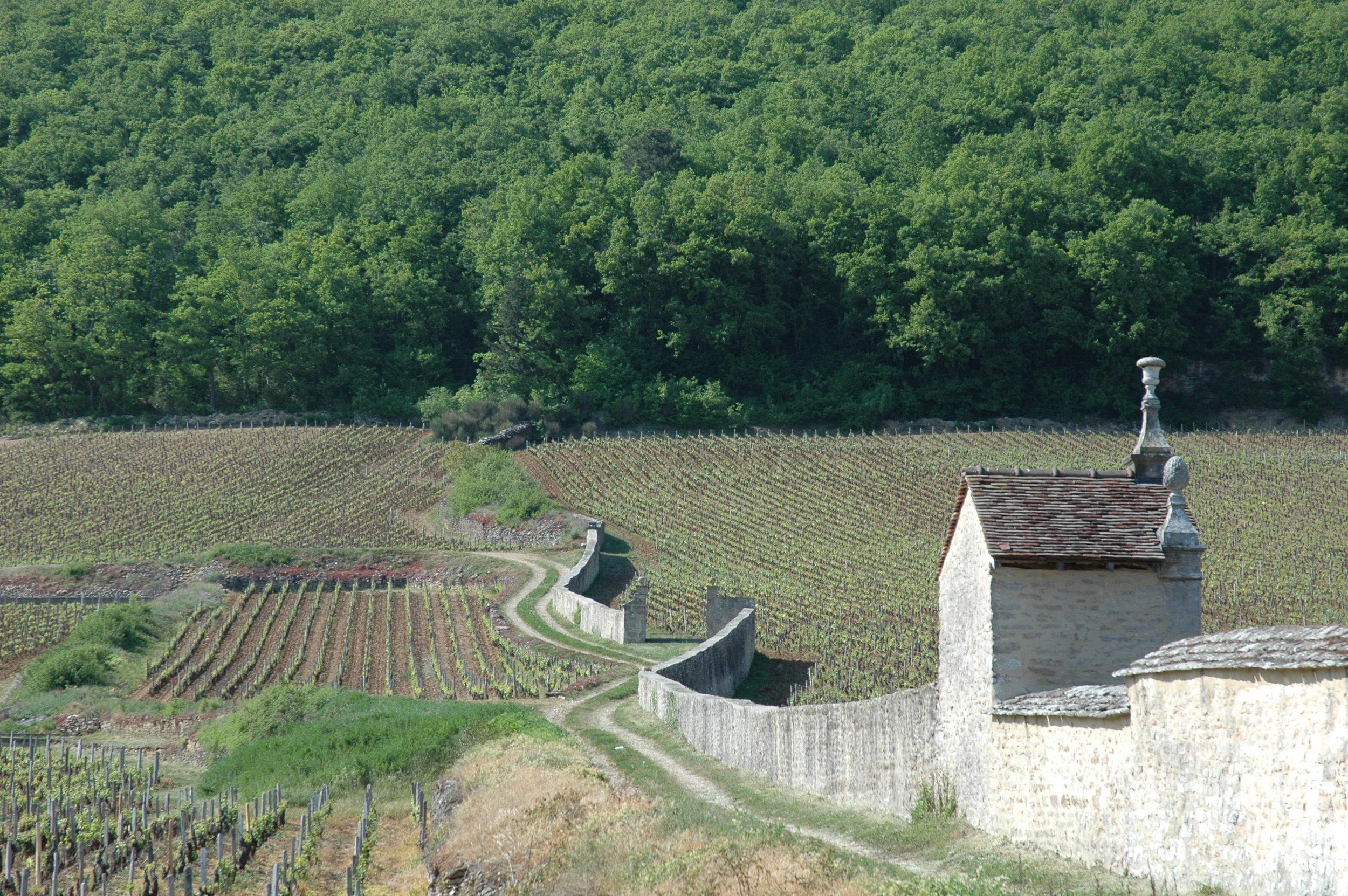 The wall enclosing Clos St Jacques, Gevrey Chambertin