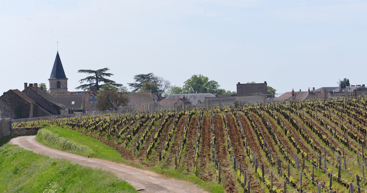 Is this the way to Romanee-Conti? -