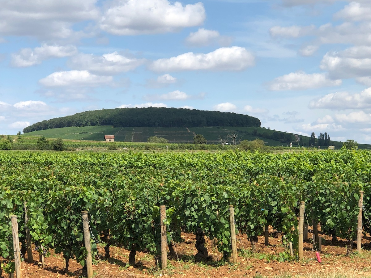 The Hill of Corton, just to the north of Beaune