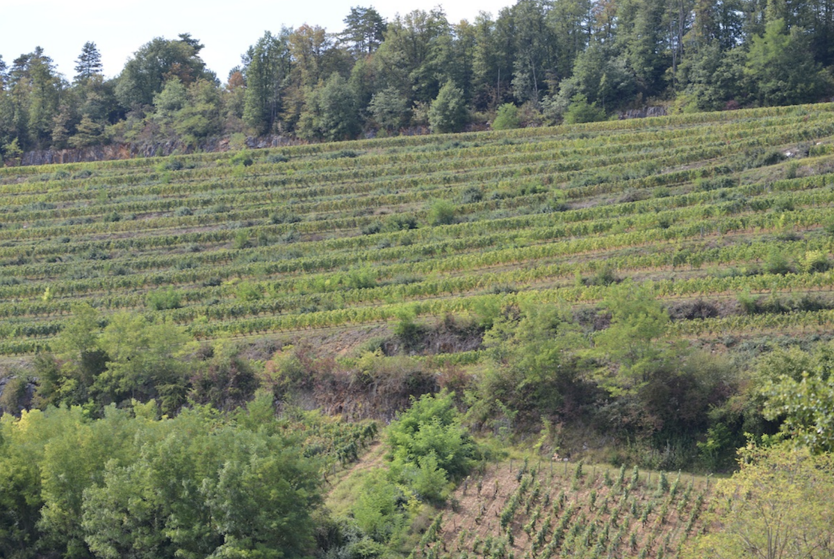 The Vineyard Les Terrasses des Vallerots, Nuits St Georges