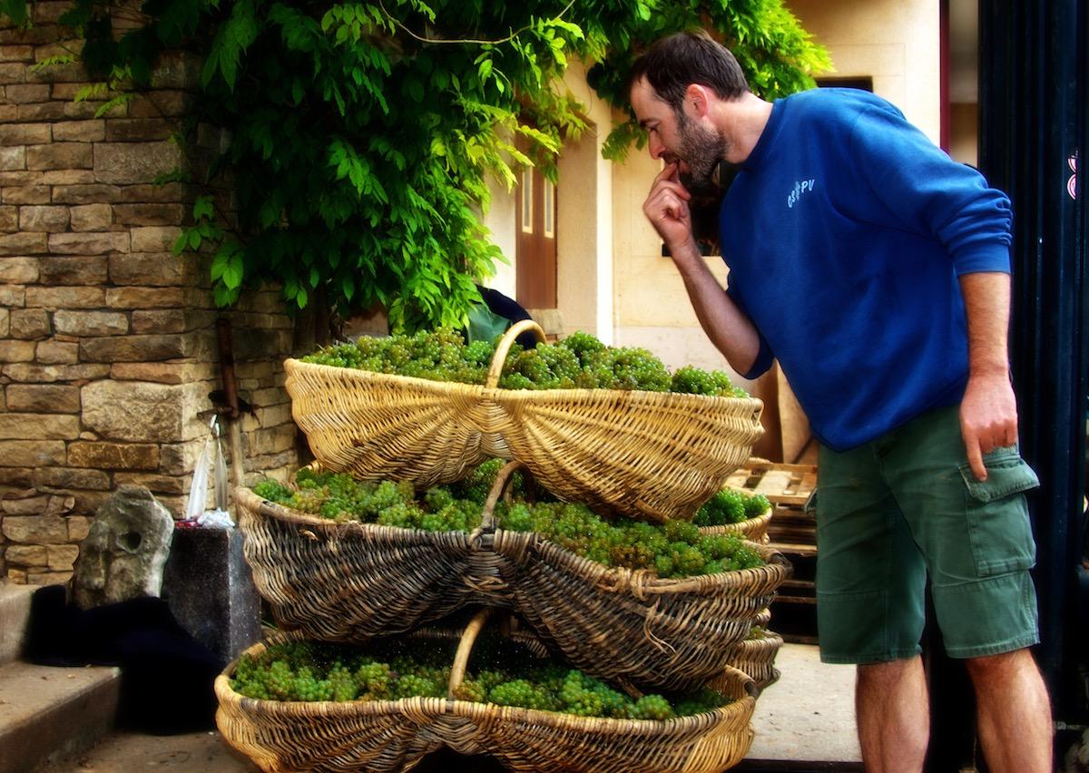 Winemaker Stories: Domain Pavelot, Pernand Vergelesses -