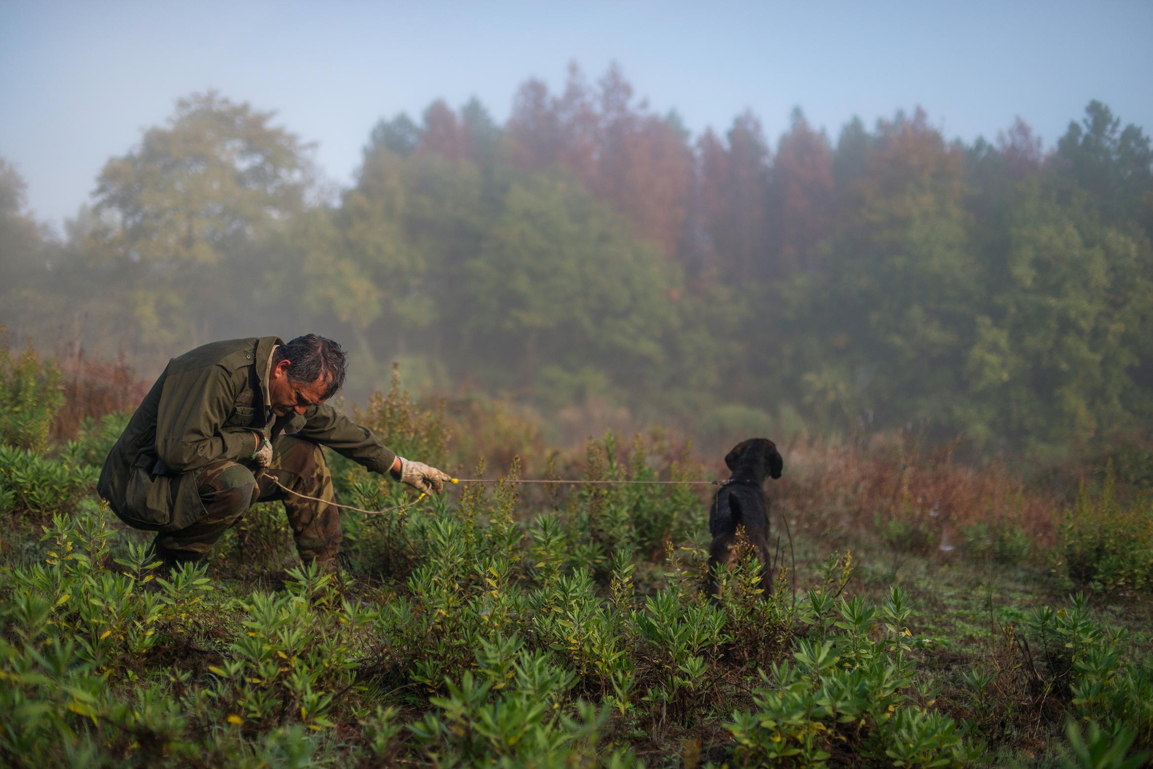 Reportage sulla caccia al cinghiale - (foto: Michele Lapini)