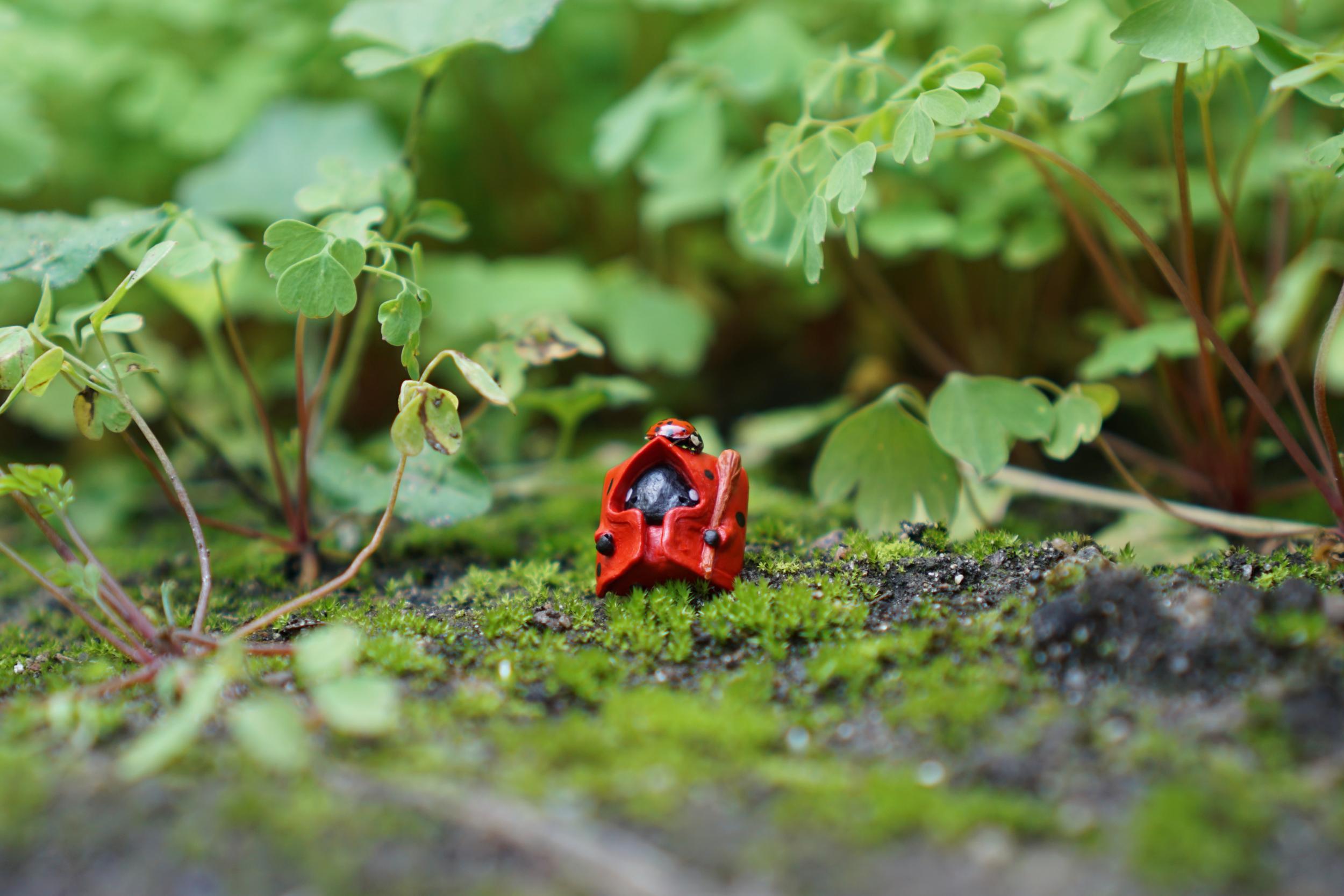 Ladybug Shepherd